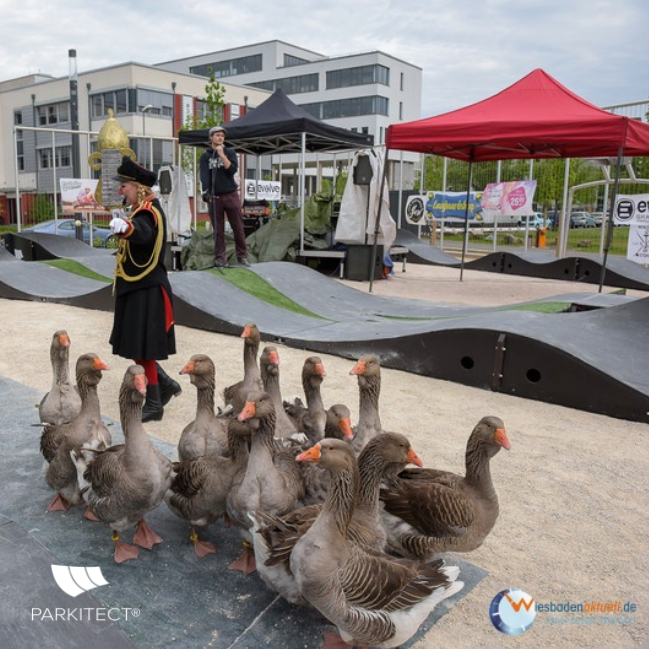 All ages, all abilities. Ducks ride a PARKITECT modular pumptrack.
